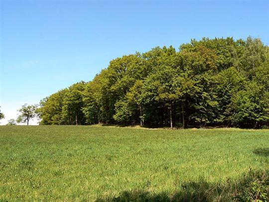 Přírodní rezervace Doubrava Stavenice