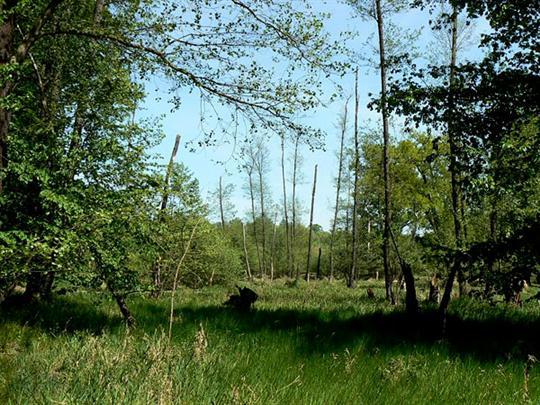 Přírodní rezervace Kačení louka Stavenice