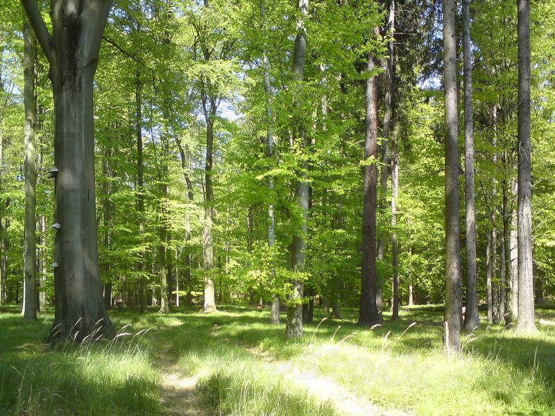 Přírodní rezervace Bradlec Stavenice