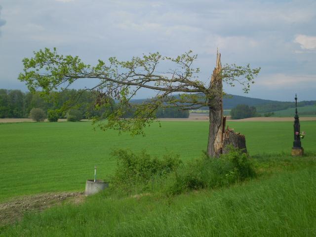 Strom Hrdina Třeština