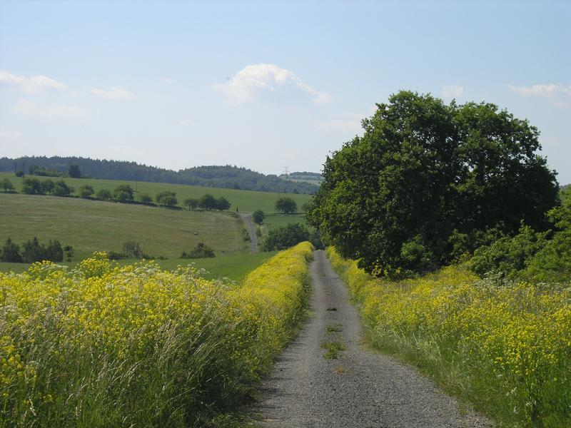 polní cesta do Krchleb