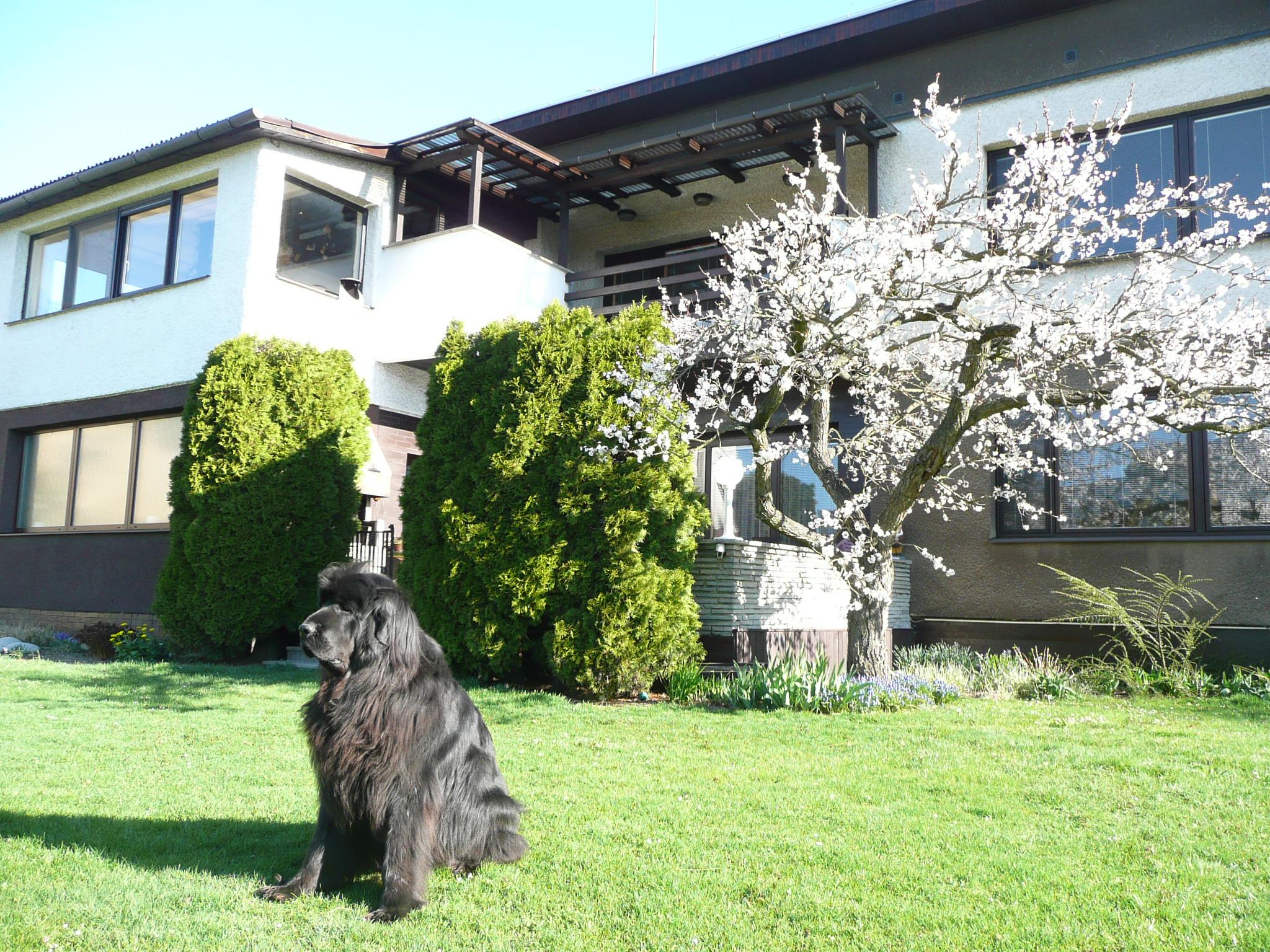 Ubytování Vila Livia Mohelnice