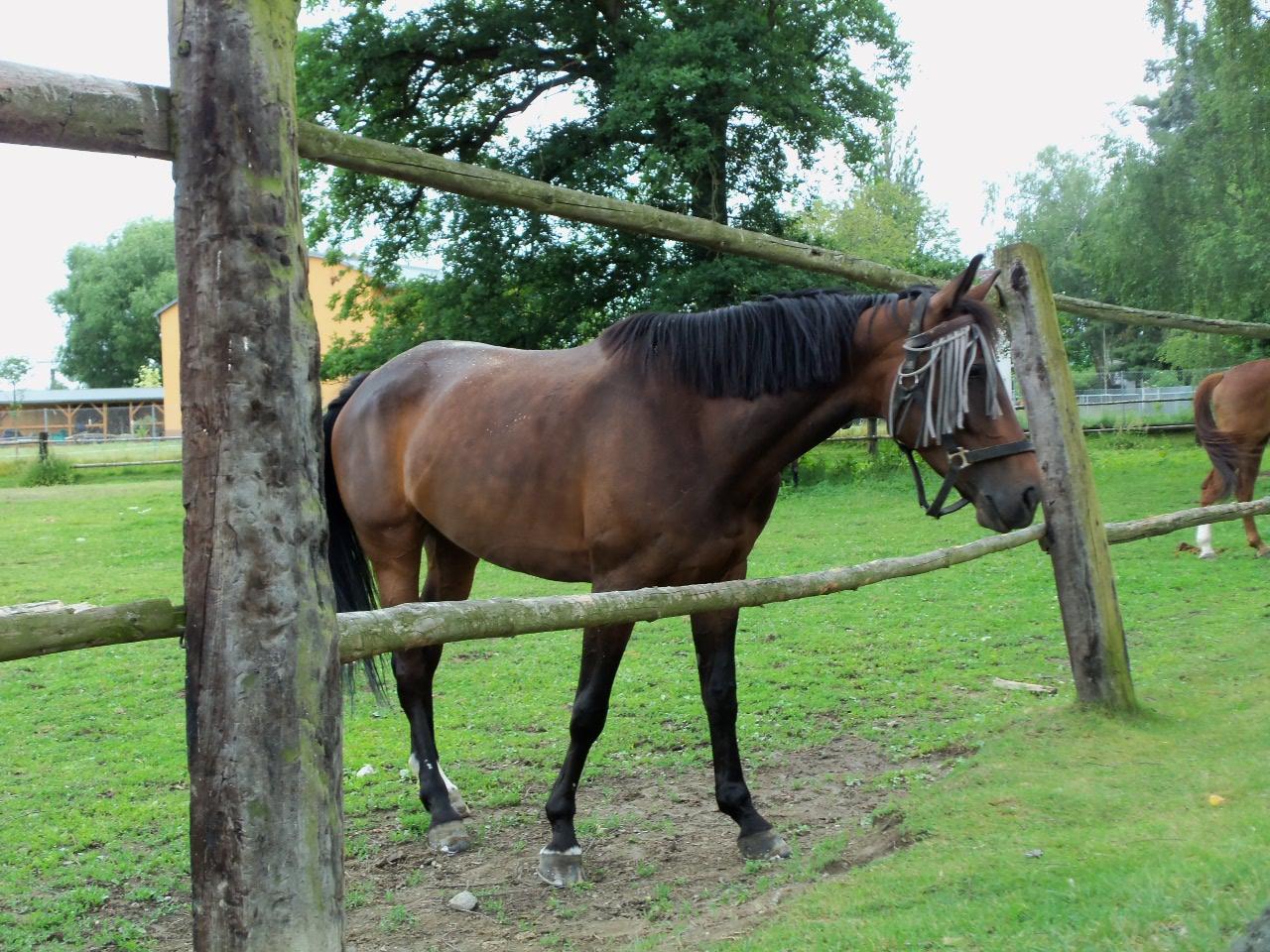 krása koně