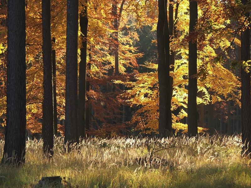 Střítežský les