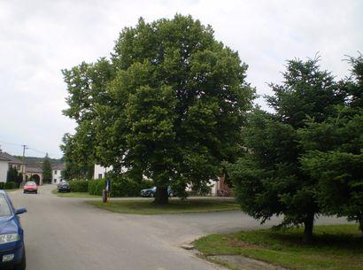 významný strom
