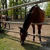 Zámecký park v Žádlovicích - koně